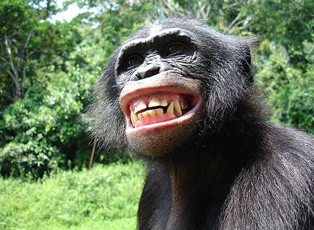 Joyeux anniversaire... - Page 3 Bonobo