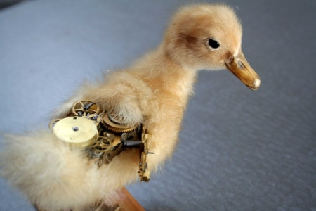Fixed - Duckling