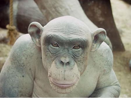 cinder-chimpanze-nu.jpg
