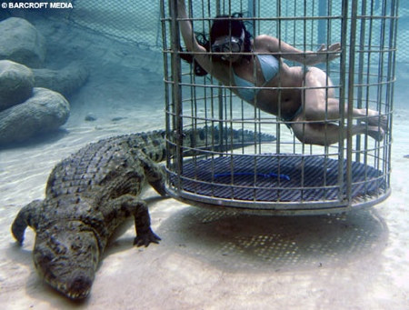 crocodile_plongee1.jpg
