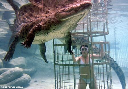 crocodile_plongee2.jpg