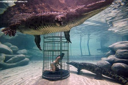 crocodile_plongee4.jpg