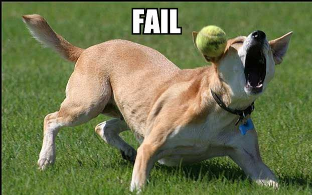 dogcatchfail.jpg
