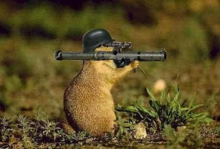 Ecureuil équipé