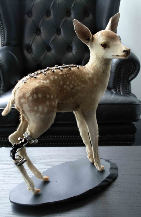 taxidermiste internaute