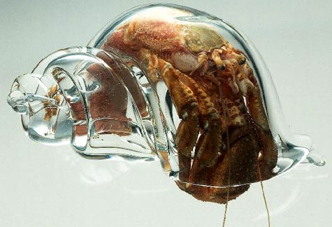 hermit-crab-in-a-glass-shell.jpg