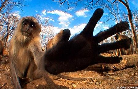monkeyy.jpg
