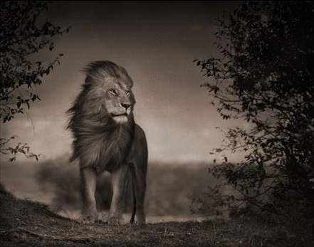 nick_brandt_1 dans Photographie: Grands Photographes