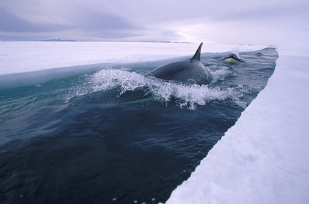 orque.jpg