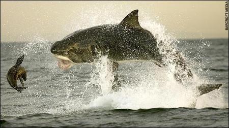 shark05.jpg