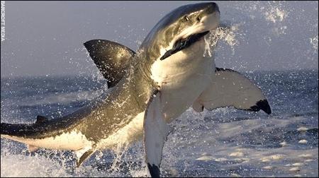 shark06.jpg